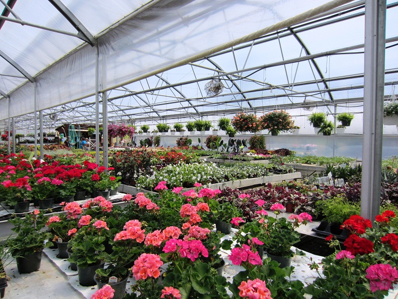 Showalter's Orchard and Greenhouse